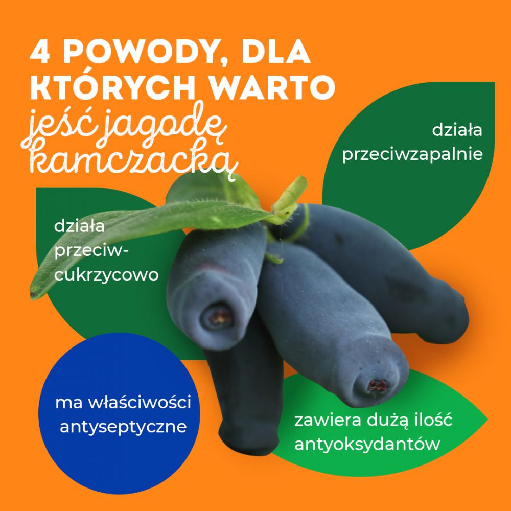 Infografika PAP/Jagoda kamczacka