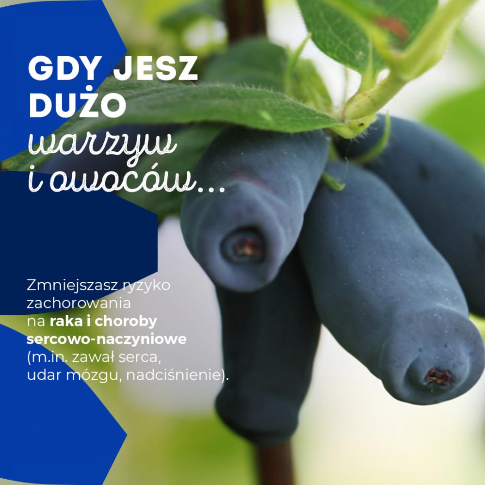 Infografika PAP/Jagoda kamczacka 2