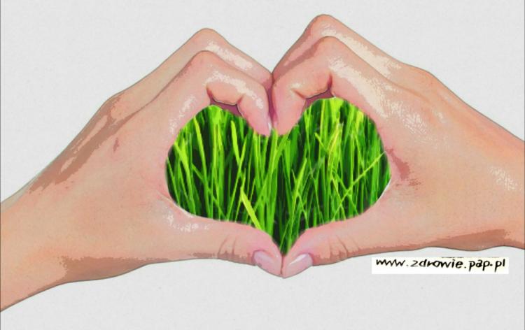 młody jęczmień zielony zastosowanie